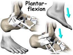 Foot Ligament Anatomy Peroneal Tendonitis U0026 Tendon Tears Houston Methodist