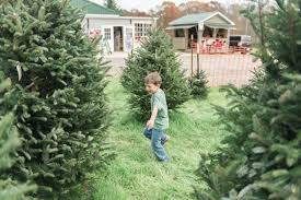 cut your own christmas tree farms around lake wylie sc nc