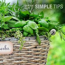 Herb Container Garden - no room to dig pot up a delicious herb container garden garden