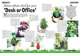 no sun plants good office plants beautiful office plants good office plants with