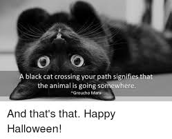 Halloween Cat Meme - a black cat crossing your path signifies that the animal is going