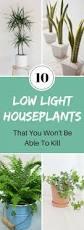 best 25 low light houseplants ideas on pinterest indoor plants