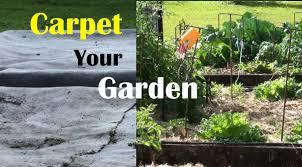 carpet your vegetable garden to stop weeds u0026 grow great crops