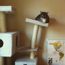 Cool Cat Furniture Cat Furniture For Fat Cats Nice Home Design Creative On Cat