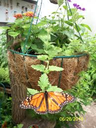 rainbow s end butterfly farm pawling ny adventures around putnam