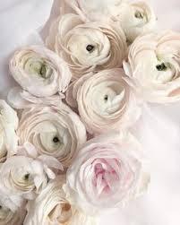 vibeke design instagram vibeke design beautiful flowers pinterest ranunculus flowers