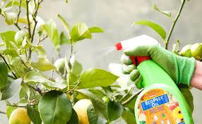 organic pest spray burke u0027s backyard