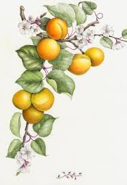 fruits u0026 vegetables u2014 botanical artist u0026 illustrator learn to