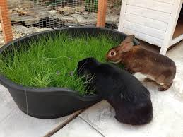 grow grass in plastic dog beds or underbed storage tubs doggie