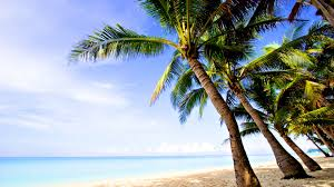 Palm Tree Wallpaper Coconut Trees Wallpaper With Beach 1920x1200px Trees Beach