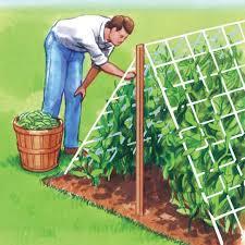 Garden Netting Trellis Trellis Netting Nylon Trellis Netting Walter Drake