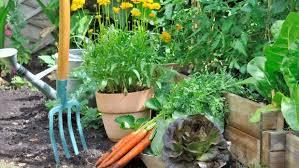 vegetable gardening for beginners part 8 fast growing veges