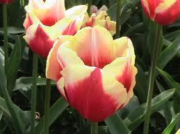 imagenes flores bellisimas las flores bellisimas by sonire on deviantart