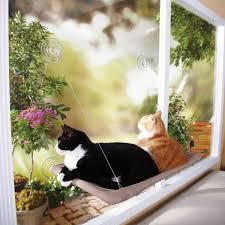 seat cat window bed