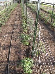 wire fence trellis home u0026 gardens geek