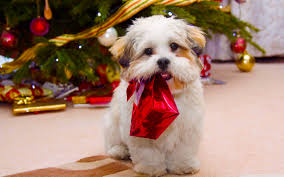 free christmas puppy wallpapers for iphone long wallpapers