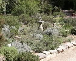 Herb Garden Winter - rosemary a robust herb of winter vegetable gardener