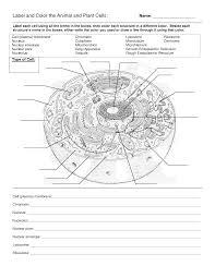 leaf anatomy worksheet key image collections learn human anatomy