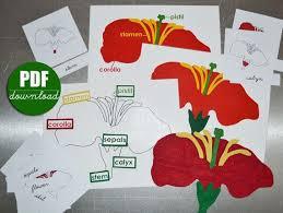 montessori tree printable digital printable pdf download to make montessori botany felt parts