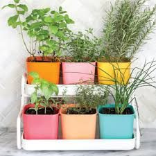 Potted Herb Garden Ideas Organic Gardening Window Herb Garden Kit Growing Herbs In Pots