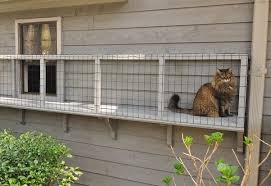 Keep Cats In Backyard 8 Answers What Are Some Ways To Keep My Cat From Leaving My Yard