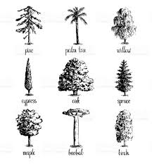 set of hand drawn tree sketches stock vector art 597659504 istock