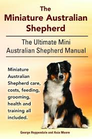australian shepherd cost buy by george hoppendale the miniature australian shepherd the