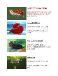 ornamental fish buy from ornamental aquatics jamaica kingston