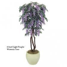 5 foot wisteria tree colors w 744