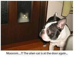 Cat Alien Meme - 25 best memes about alien cat alien cat memes