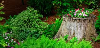 How To Make Planters by How To Make A Tree Stump Planter Steps Tools Bombay Outdoors