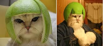 Internet Meme Costumes - limecat halloween costume neatorama