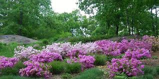 Botanic Garden New York Gardens In New York Unique New York City Botanical Gardens