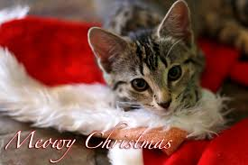 Merry Christmas Cat Meme - christmas cat pictures funny merry christmas happy new year 2018
