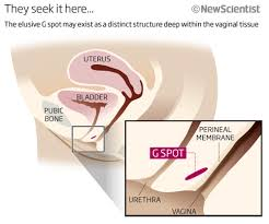 woman s virgina yes yes no g spot finding fails to convince new scientist