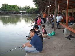 cara membuat umpan mancing ikan mas harian cara membuat umpan ikan mas air keruh teruh