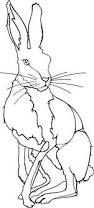 bunny coloring pages rabbit embroidery patterns