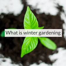 what is winter gardening backyard eden