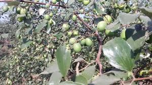 Blackmoor Fruit Trees - apple bare youtube