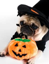 Pug Halloween Costume 77 Pet Costumes Images Animals Pet