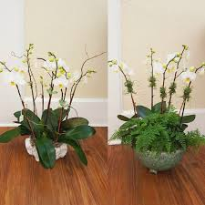 orchids in decorative pots u2013 ready for shipping or delivery