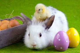 happy easter bunny hd wallpapers hd wallpapers gifs