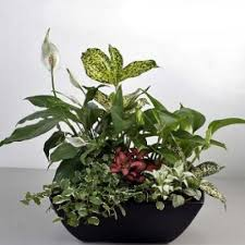 indoor plants singapore 3 florist indoor plants basket arrangement mini garden singapore