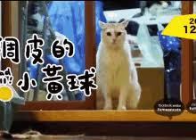 Talking Cat Meme - talking cat meme gifs tenor
