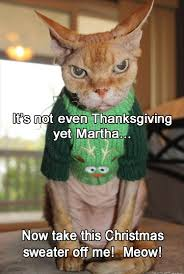 silly thanksgiving funny animal pictures of the day 26 pics