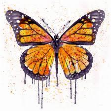 butterflies art fine art america