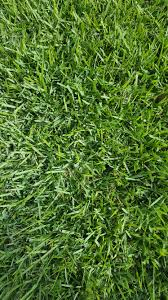 empire zoysia sod grass in tampa bay ocala florida