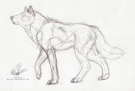 wolf spirit lineart sketch by wolf spirit89 on deviantart