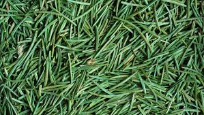 clean up tree pine needles from your floor easily huffpost