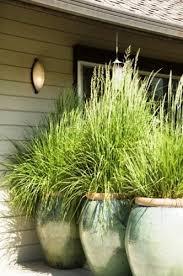 ornamental grasses the lovely plants